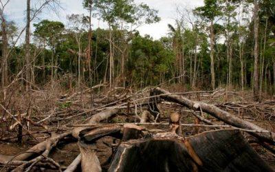 Pastor Ariovaldo: Os povos da floresta à mercê de uma política genocida