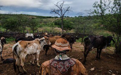 Gerazeiros da Bahia são ameaçados por pistoleiros e tem gado roubado em terras tradicionalmente ocupadas