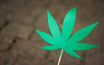 O que a mudança na lei das drogas afeta em sua vida?