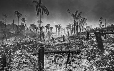 Araquém Alcântara: Eu estive lá e vi. A intensificação do desmatamento é real!