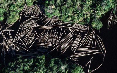 Organizações da sociedade civil assinam carta sobre crise e desmatamento na Amazônia