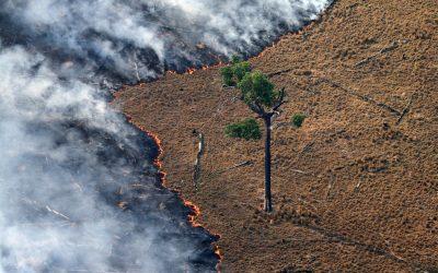 10 coisas que você precisa saber sobre as queimadas na Amazônia