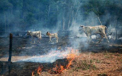 Filmes e séries para entender o que se passa na Amazônia