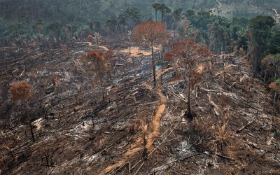 Como o Brasil chegou a esse ponto catastrófico?