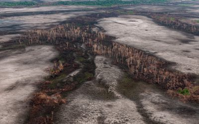 Projeto de lei torna o licenciamento ambiental exceção em vez de regra