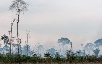 A Amazônia precisa de uma economia do conhecimento da natureza