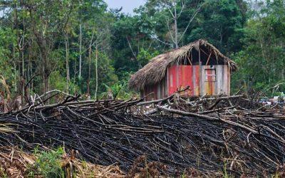 O desmate (e o boi) avançam. Dados apontam nova fronteira do desmatamento no Acre