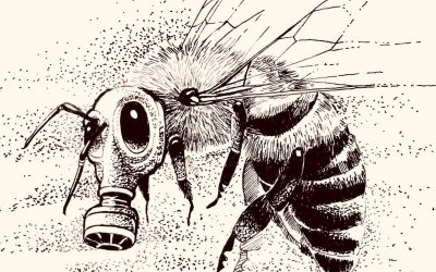 Dia nacional das abelhas: uso desenfreado de agrotóxicos está acabando com as abelhas