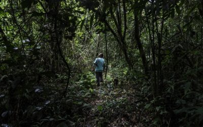 Encontro em Altamira propõe aliança global pela região Amazônica