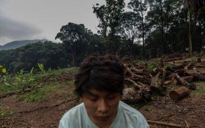 Construtora derruba mais de 500 árvores e quer retirar Guarani do Jaraguá
