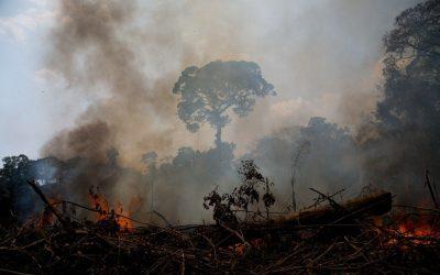 Pulmões ameaçados: Amazônia pode viver auge do Coronavírus durante temporada de queimadas