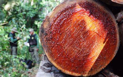 Em abril deste ano o desmatamento na Amazônia cresceu 171% em comparação a 2019