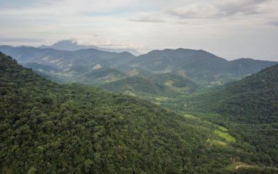Dia Nacional da Mata Atlântica alerta para aumento do desmatamento