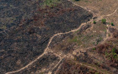 Para combater o desmatamento, Europa quer boicotar produtos brasileiros