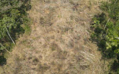 Ambientalistas e artistas se articulam contra PL 2633 (PL da Grilagem)