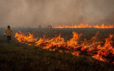 Investimentos estrangeiros no Brasil caíram 85% em agosto e crise ambiental pode piorar quadro
