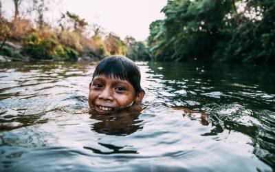 Dia do Cerrado: Segundo maior bioma brasileiro está extremamente ameaçado
