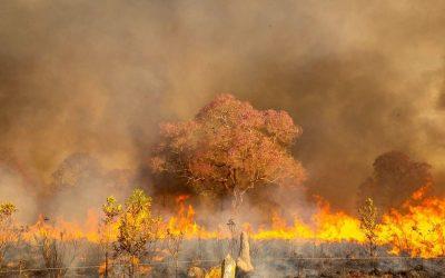 Incêndios no Pantanal de MT foram provocados por infratores, afirma perícia