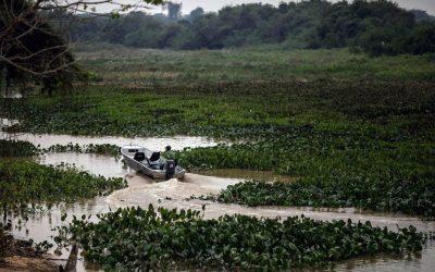 Desvendando o Pantanal