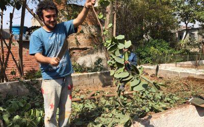 """""""Vivemos um momento em que é necessário fortalecer a agricultura urbana"""""""