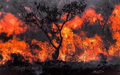 Aulão NINJA apresenta relação entre grilagem e mudanças climáticas