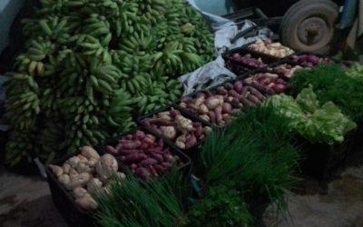 Indígenas Xukuru Kariri produzem e doam alimentos em Alagoas