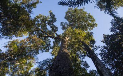 Projeto de concessão de florestas para iniciativa privada é tema de Aulão NINJA