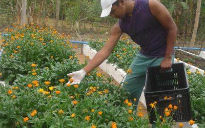 Uso de plantas medicinais no SUS é estimulado em Betim (MG)