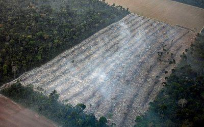 Monitoramento de queimadas e desmatamento na Amazônia são tema do Aulão da Mídia Ninja com o ISA