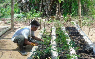 Agentes Indígenas Agroflorestais dão exemplo de desenvolvimento sustentável no Acre