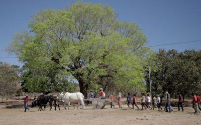 Morro do Fogo: fé e luta quilombola